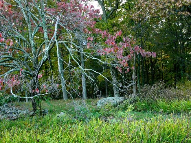 Autumn, Scotrun, Pennsylvania.  By Paul Goldfinger.  Left click for full image.