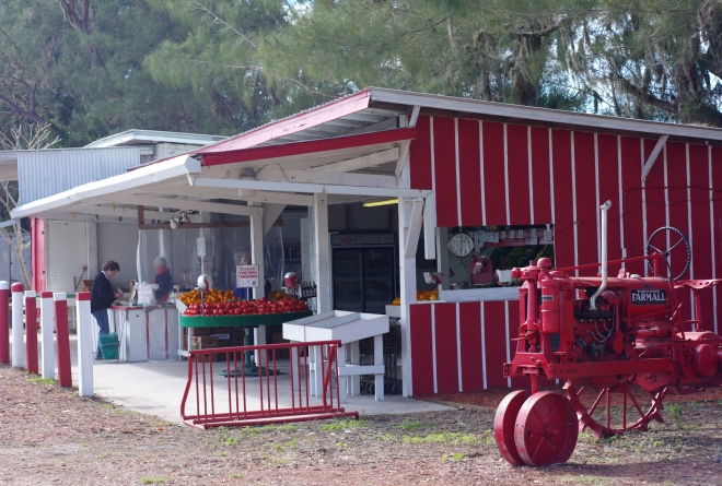 Gladiolus tomato farm stand.  PG photo